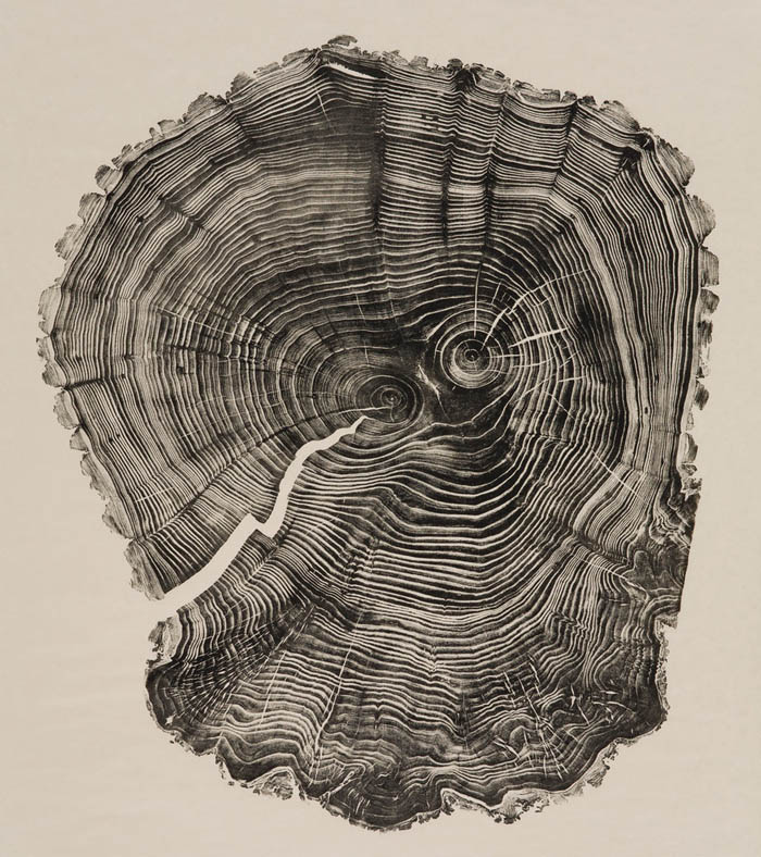relief prints of tree-trunk cross sections, art from nature and found objects, printmaking, Bryan Nash Gil
