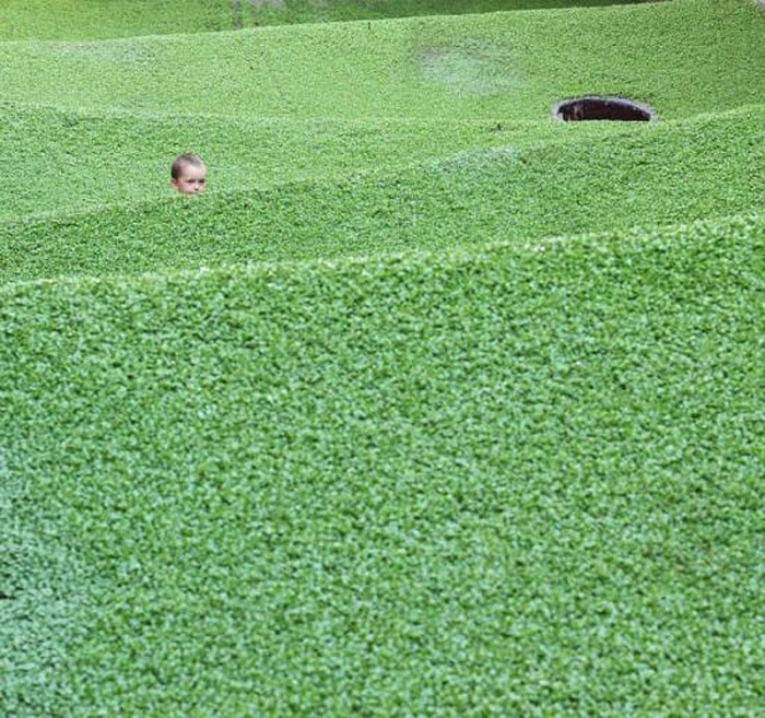 D-day Festival, Zagreb, Numen/For Use, Field, cool installation, grass carpet suspended within a former slaughterhouse