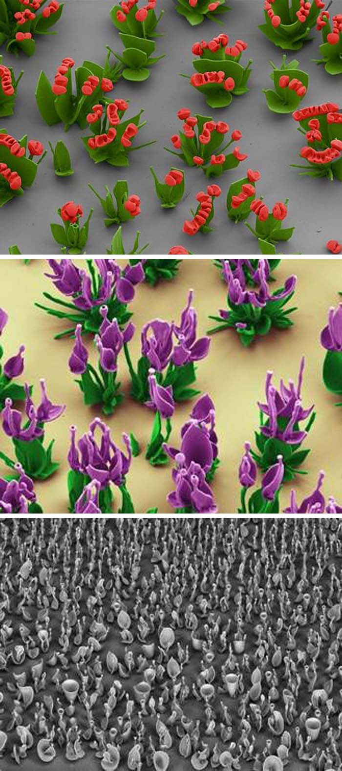 Microscopic Flowers made of chemical, Wim Noorduin, Harvard, cool manipulated design in science
